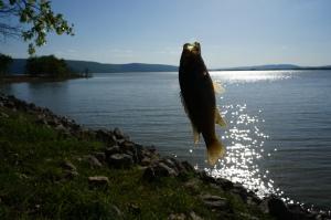 Sardis Lake, OK 008