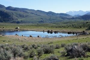 Yellowstone, WY 016