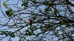 K1600_Crooked Tree, BLZ 007