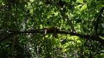 Manuel Antonio Nationalpark, CR 037